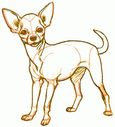 how to draw chihuahuas - Google Search