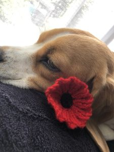 Ravelry: Remembrance Poppy pattern by The Knit Guru Free Knitted Flower Patterns, Knitted Poppy Free Pattern, Knitted Poppies, Knit Flowers, Crochet Flower, Remembrance Day Poppy, Poppy Craft, Baby Hats Knitting, Charity Knitting