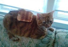 トーストと柄が一緒ww