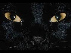 Afbeeldingsresultaat voor ozzy-cat