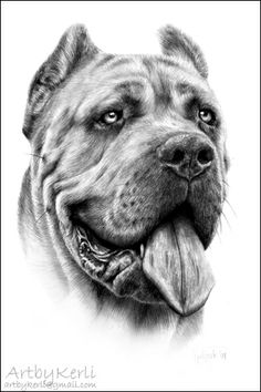 Cane Corso Dago, pencil drawing (A3). Art by Kerli, 2009.