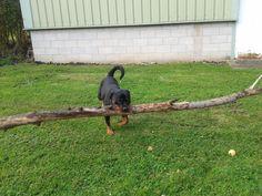 """""""Oh this little thing? Yeah it's no big deal."""" 