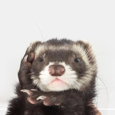 See this Instagram photo by @the.modern.ferret • 818 likes