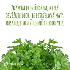 Tip, jak osvěžit dech i bez žvýkačky nebo zubní pasty - Heky. Parsley, Herbs, Tips, Herb, Spice, Hacks, Counseling