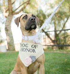 Dog Bandana Dog of Honor Wedding Collar Girl by AllPuppiesandLove
