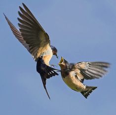 Pictures of the day: 20 July 2010 - Telegraph barn swallows