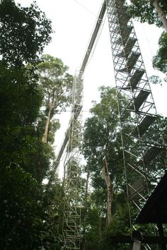 Reach for the sky! The Canopy Walk is one of our favorite things to do here at Ulu Ulu :) Park Resorts, Brunei, Cambodia, Laos, Canopy, Philippines, Singapore, Vietnam, Eco Friendly