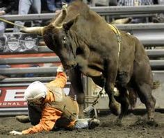 pbr bull riding pictures - Bing Images