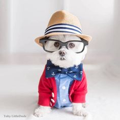 Toby LittleDude the dog is one hipster everyone's falling in love with.