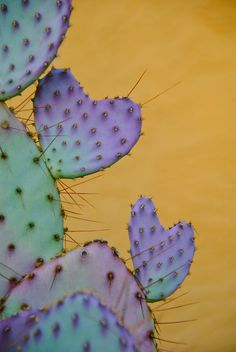 Valentine Cactus. Nothing says love like a plant with spikes that'll make you bleed!