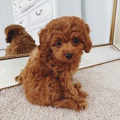 Dogs are the best pets ever and they know how to entertain their owner. Enjoy funny dogs that will make your day. Super Cute Puppies, Baby Animals Super Cute, Cute Baby Dogs, Cute Little Puppies, Cute Dogs And Puppies, Cute Little Animals, Cute Funny Animals, Cute Babies, Doggies