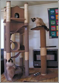 diy cat tree | Here are some examples of kitty jungle gyms we designed and built  | followpics.co