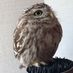Leisure Owl is the best place to find the coolest creations, strangest products, and the best videos. Super Cute Animals, Cute Little Animals, Cute Funny Animals, Funny Birds, Cute Birds, Funny Animal Memes, Funny Animal Pictures, Animal Humor, Cute Cows