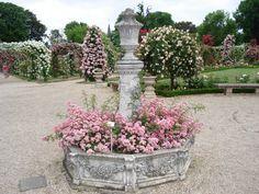 Red Rose Flower Garden Wallpaper Http Refreshrose Blogspot Com
