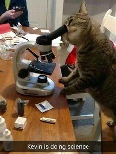 Sciencing