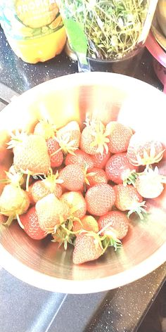 14/06/2018 - Very pleased my five pots have produced so many strawberries this year so far heres a few of them from last nights pickings :0) #juicystrawberries #homegrown