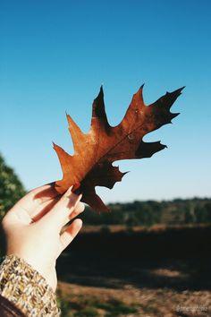 Autumn leaf on a sunny day