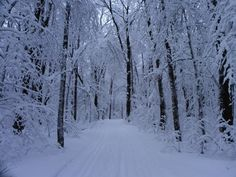 Winter Wonderland, Allegany State Park - photo by Kathy Hardiman