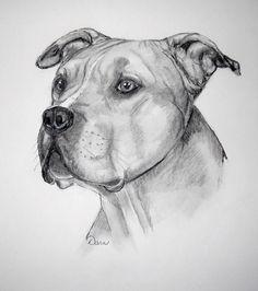 Animal Sketches, Art Drawings Sketches, Animal Drawings, Tatoo Books, Pitbull Drawing, Dog Portraits, Pitbull Terrier, Dog Art, Pitbulls