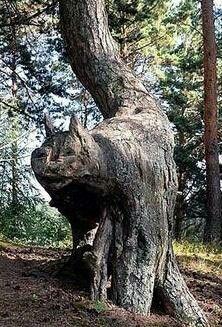 Cat tree...tree cat?