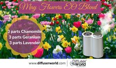 May Flowers Essential Oil Blend
