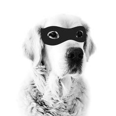 MY DEER | Super Dog Print (Pre-order Sept)