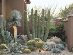 Succulent Landscaping, Front Yard Landscaping, Succulents Garden, Landscaping Ideas, Backyard Privacy, Modern Landscaping, Lush, Xeriscaping, Home Garden Design