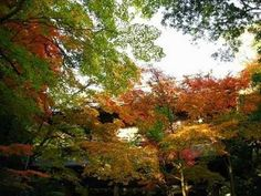Japanese Music( Instrumental) A Day in Autumn  Part 1.2.3 ▶ 【邦楽】長沢勝俊 秋の一日1~3章 - YouTube