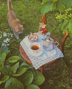 Theme Nature, Photo Chat, Cottage In The Woods, Nature Aesthetic, Goblin, Aesthetic Pictures, Cute Animals, Kitty, Drawings