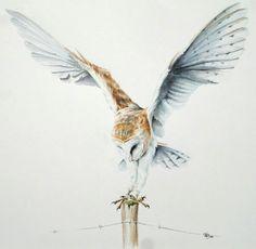 Amazing barn owl artwork