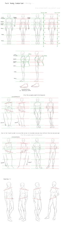 full_body_tutorial_by_nominee84-d30o4kv.png 423×1'600 Pixel