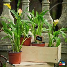 Jard n amarillo y primavera for Jardin vertical sodimac