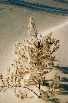IceCrystal Plant Art Print