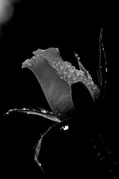 Stylish Black and White