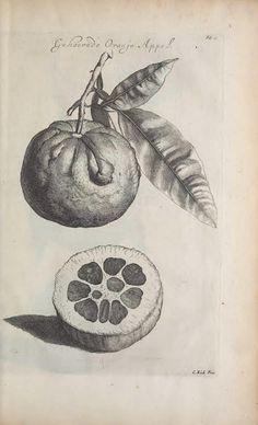 Orange. De koninglycke hovenier aanwyzende de middelen om boomen  t'Amsterdam :By Marcus Doornick [sic] ...,[1676]  Biodiversitylibrary. Biodivlibrary. BHL. Biodiversity Heritage Library