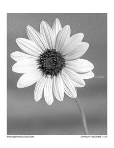 Learn about Grayscale (printable coloring page!) | Free printable ...
