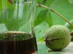 Máte na zahradě ořešák? Tento čaj z ořechového listu vám změní život: tyto léčivé účinky by měl vědět každý! | iRecept.cz