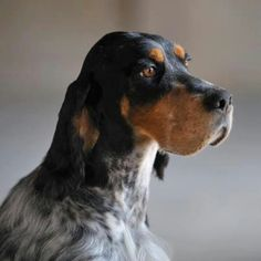 """Click visit site and Check out Best """"English Setter"""" T-shirts. This website is superb. Tip: You can search """"your name"""" or """"your favorite shirts"""" at search bar on the top."""