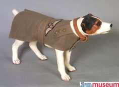 RFC dog jacket.    Dogs were an airman's best friend. They were popular mascots and regularly appear in photographs of air and ground crews. This dog jacket was worn by a Yorkshire terrier belonging to an officer of the Royal Flying Corps who had an RFC tailor make it. It is adorned with RFC Pilot's wings, Captain and Observer badges.