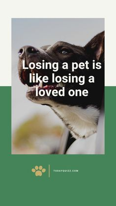 Anyone who has allowed a pet to become a part of their lives understands that a pet may be a member of your family. Once you lose that pet, whether it's unexpected or adult, it doesn't change the very fact that a hole has been left in your life. You still have to take the time to grieve your loss until you feel ready to celebrate the life of your pet someday.