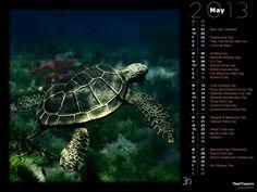 World Turtle Day (Rendered)