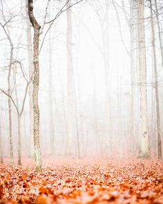 Forest of fog with a blanket of orange leaves
