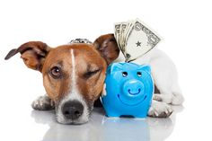 Encuentra la forma de tener bien a tu mascota y así poder ahorrar dinero. #fotozoo #kikecadena #fotografodemascotas