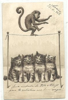 Cats Monkeys Comic Monkey Cat Animals Old Embossed Postcard | eBay