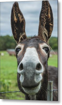 America Photograph - Animal Personalities Friendly Quirky Donkey Face Close Up by Jani Bryson Cute Baby Animals, Farm Animals, Animals And Pets, Funny Animals, Wild Animals, Pretty Horses, Beautiful Horses, Animals Beautiful, Cute Donkey