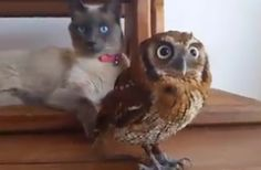 André Costa writes on his Facebook that he hopes their friendship will inspire people to be kind to animals. | This Owl And Cat Are Best Friends And It Will Melt Your Stone Cold Heart
