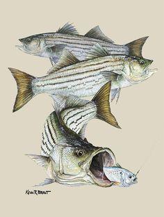 Ready to go slay some striper tomorrow night Striper Fish, Fish Illustration, Illustrations, Rockfish, Bass Fishing, Fishing Tips, Baby Fish, Marine Conservation, Monogram Decal