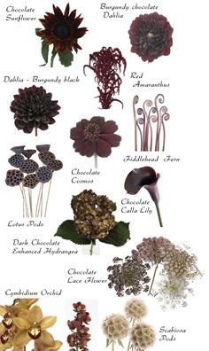 Flower names by Color - I love it~stuff - Hochzeitsblumen Types Of Flowers, Cut Flowers, Colorful Flowers, Beautiful Flowers, Brown Flowers, Flower Colors, Autumn Flowers, Fresh Flowers, Wild Flowers