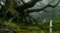 The launch fantasy looter title Godfall is already being compared to Destiny. , The launch fantasy looter title Godfall is already being compared to Destiny. Environment Concept, Environment Design, Fantasy Forest, Fantasy Art, Fantasy Landscape, Landscape Art, Bungie Destiny, Destiny Xbox, Destiny Game