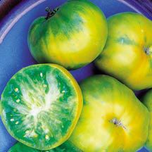 Aunt Rubys German Green Tomato | Heirloom - Open Pollinated | Large Tomatoes | Tomato Seeds | Totally Tomatoes